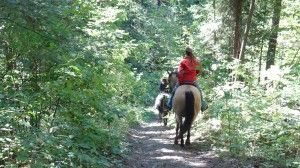 Trail riding at Horse Country Campground!  37 Kilometers of gorgeous trails! www.horsecountrycampground.com #trailriding #equine #camping