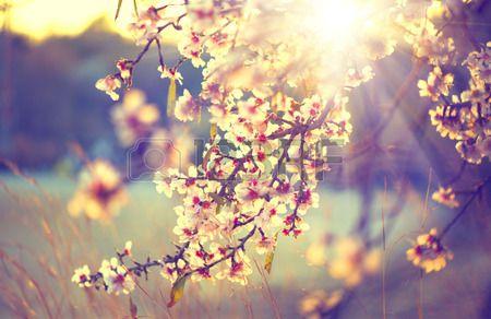 Natura bella scena con albero fiorito e il chiarore del sole Archivio Fotografico