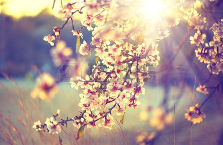 Beautiful Nature Scene With Blooming Tree And Sun Flare Stock ...