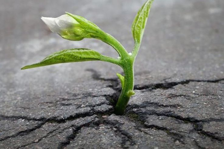 植物には何千年も生きる樹木があったりと、その生命力の強さは誰もが知るところです。ここでは、その植物が持つたくま […]