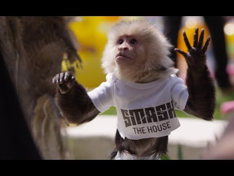 Dimitri Vegas & Like Mike vs Ummet Ozcan - The Hum ( Official Music Video ) - YouTube