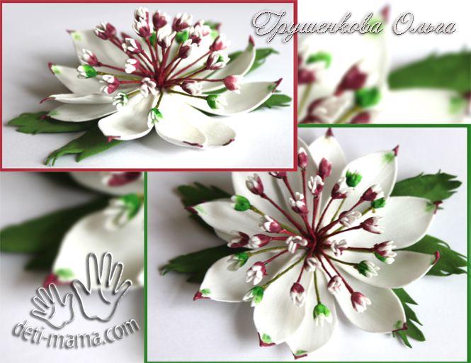 Здравствуйте. Ну, вот добралась до нового мастер класса по фоамирану. На этот раз это будет необычный цветок – Астранция.
