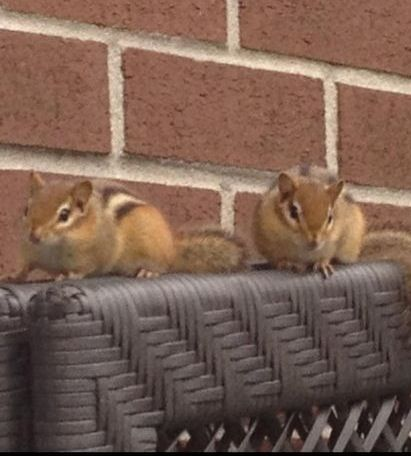 Chip & Dale?