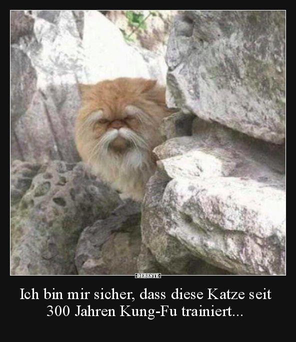 Ich bin sicher, diese Katze gibt es schon seit 300 Jahren .. | Lustige Bilder, Sprüche …   – witze