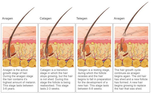 Three separate stage :Anagen, Catagen and Telogen are distinguishable steps that form the hair growth cycle.The Best Time for laser hair reduction is when the majority of the hair is in the Anagen growth phase!