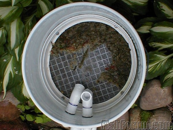 Diy canister filter for water garden pond tropical fish for Duck pond filtration