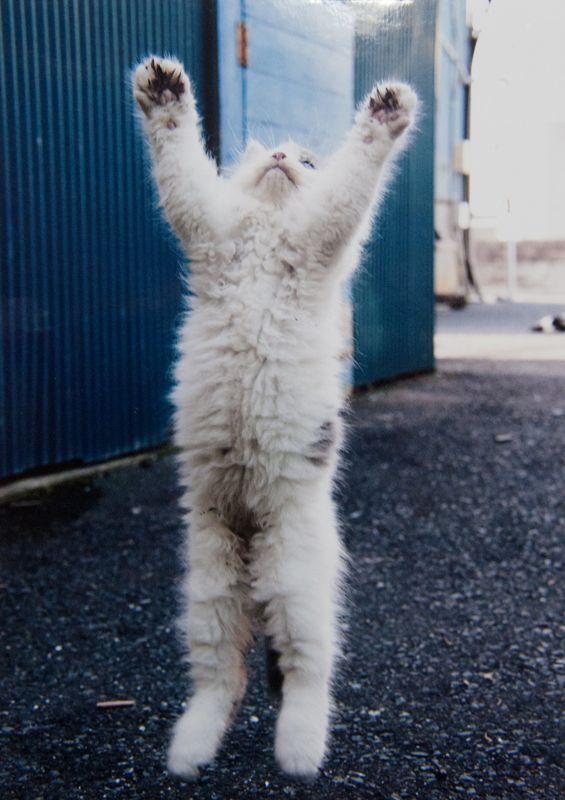 田代島猫景色 (続編49) にゃんフォトコンテスト入賞発表です! : Cats in Town Blog