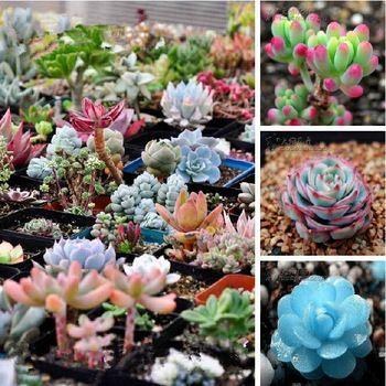 Envío gratis 40 Mix Suculentas semillas de loto plantas Bonsai Lithops Pseudotruncatella Semillas para el hogar y jardín macetas jardineras