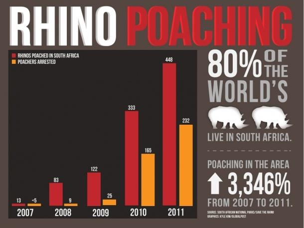 Rhino Poaching[INFOGRAPHIC]