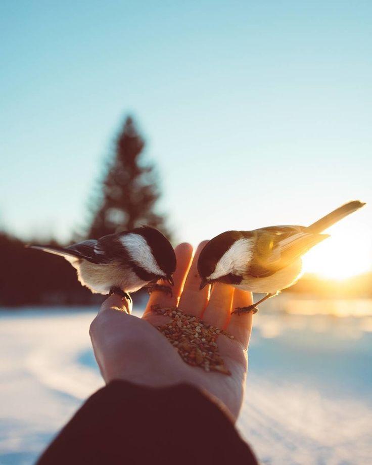 Птица красивая в руках фото