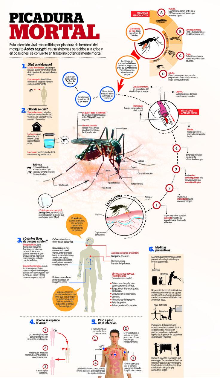 Esta infección viral transmitida por picadura de hembras del mosquito Aedes aegypti, causa síntomas parecidos a la gripe y en ocasiones, se convierte en trastorno potencialmente mortal.