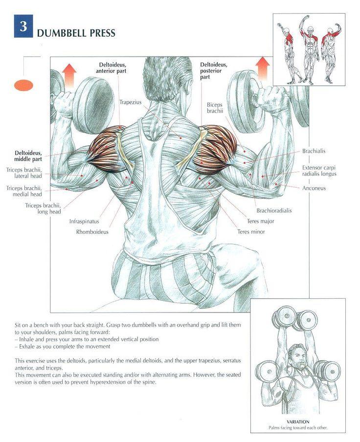 Ejercicios de Hombros para Gym ;)                                                                                                                                                                                 Más