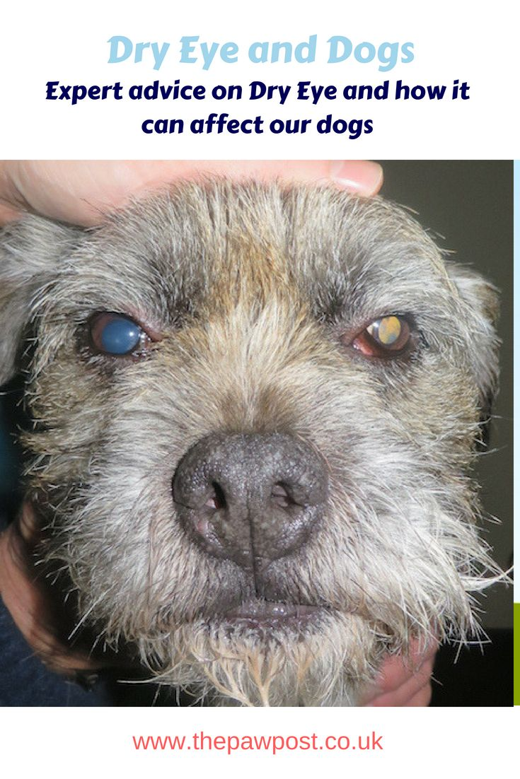 Caring For Your Dog S Eye Health For Dry Eye Awareness Month Dog