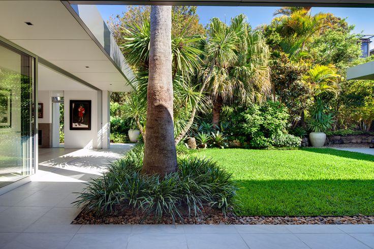 Palm trunk & underplanting