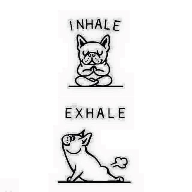 """Frenchies do smile when they """"exhale"""" for sure"""