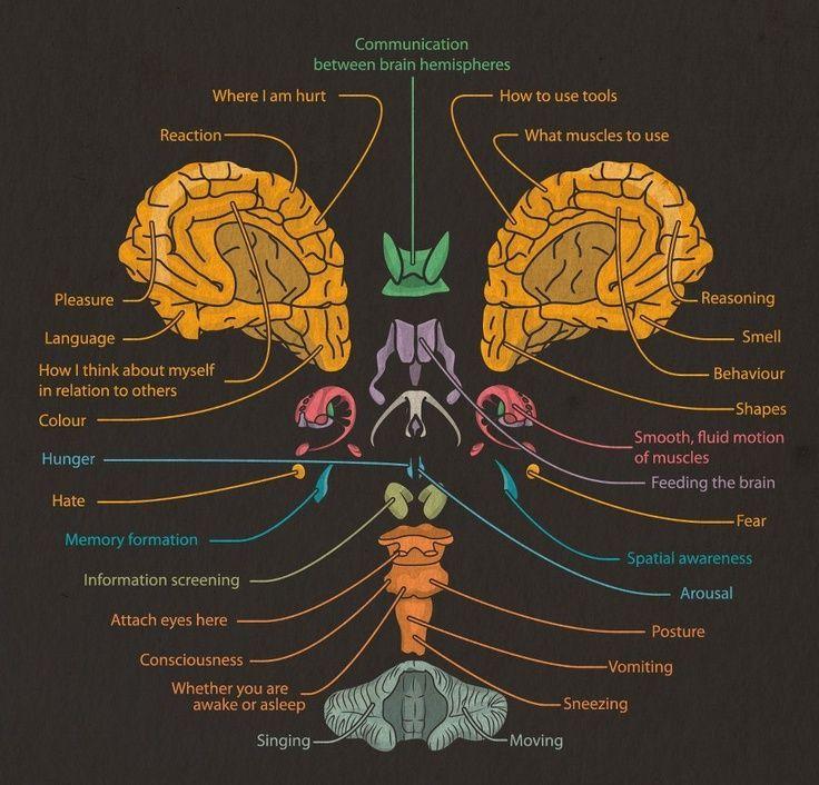 mind an essay on human feeling Essay review- susanne k langer's mind: an essay on human feeling  harold osborne i susanne k langer, mind: an essay on human feeling,  vol 1.