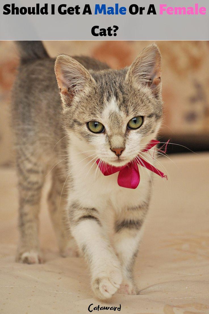 Cat Gender Male Cat Female Cat Kitten Tips in 2020