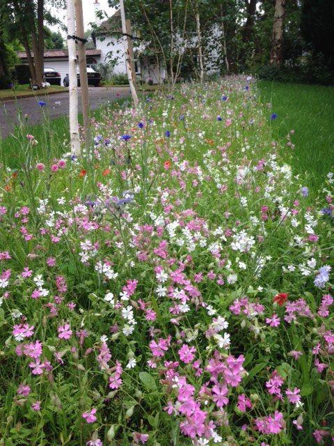 border turf from wildflower turf what it looks like in may wildflowersgarden ideasvibranttwitter