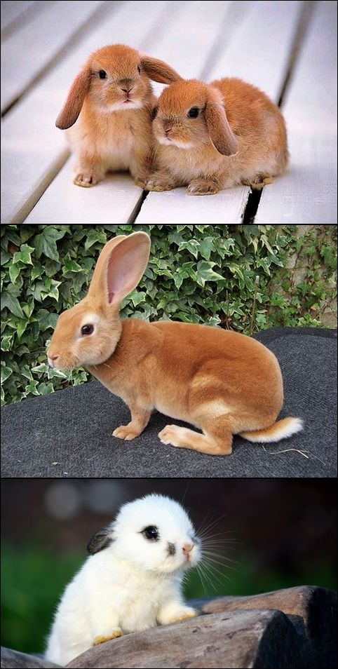 ●•●•●•●•●•● Animals ●•●•●•●•●•● i think the second one is a mini Rex.