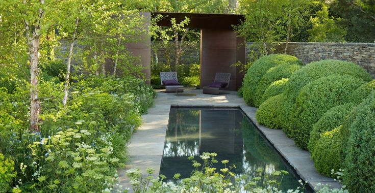 Tom Stuart-Smith. Betula nigra, cloud-pruned Buxus sempervirens, and under planting of woodland flowers, dominated by grasses, Euphorbias, blue Iris sibirica and fresh white flowers.