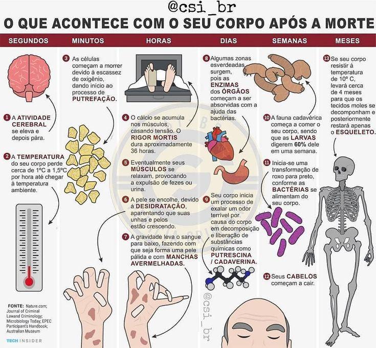 Mejores 55 imágenes de anatomia en Pinterest   Cuerpo humano ...