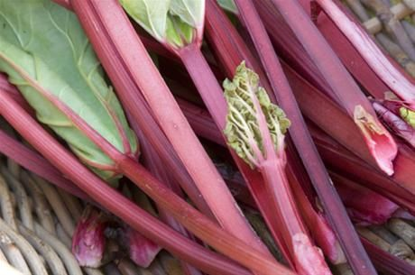 Di's Rhubarb produces sweet, red, juicy rhubarb ( a different variety to what you find in backyards) from a plot of land at the Tahbilk Estate winery in Nagambie, Victoria.