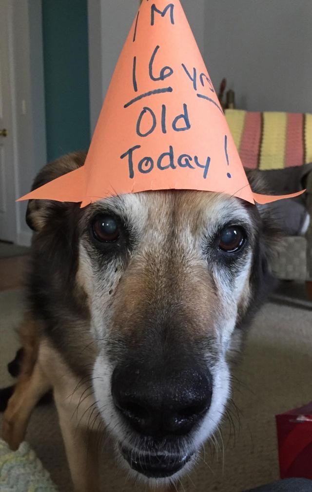 86 Photos Of Adorable Senior Dogs Old Man Birthday Man Birthday Senior Dog