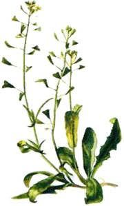 Medicinal herbal website.  Includes multiple recipes with each herb type.