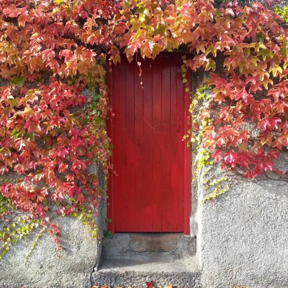 doors of Dublin, red door