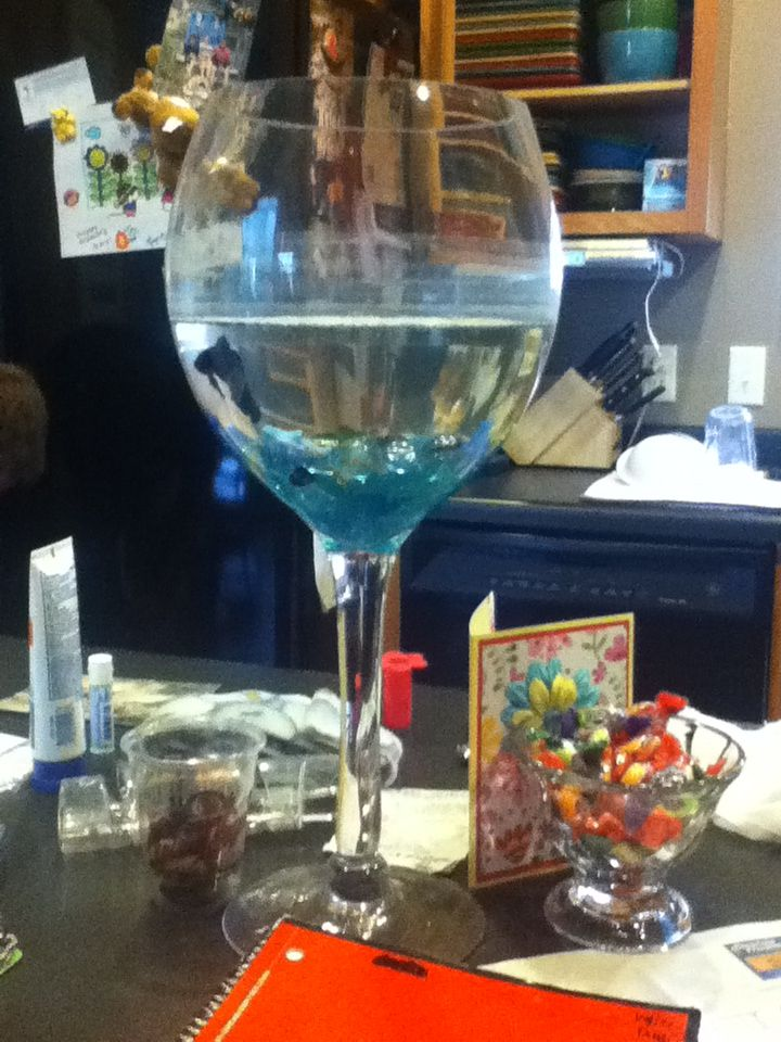 Giant wine glass betta fish tank with gems in the bottom - Glass stones for fish tanks ...