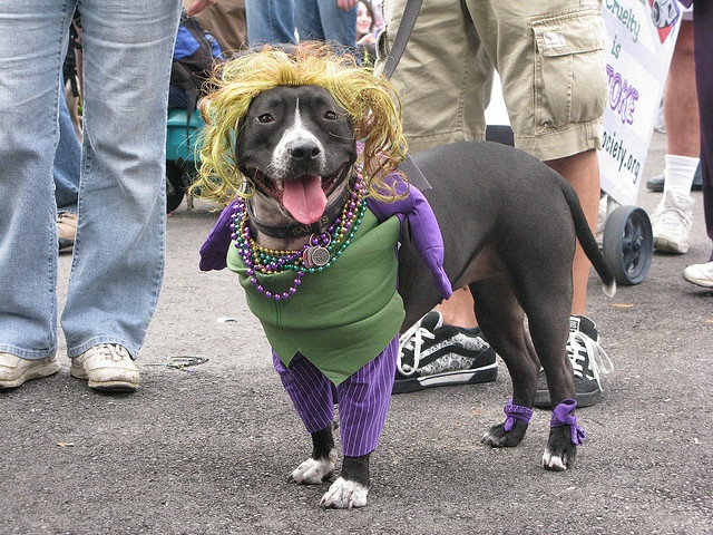 Krewe of Barkus Parade, Mardi Gras, French Quarter, FL  2009