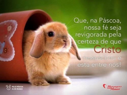 """""""Que, na páscoa, nossa fé seja revigorada pela certeza de que Cristo ressuscitou e está entre nós!"""" #Pascoa #FelizPascoa"""