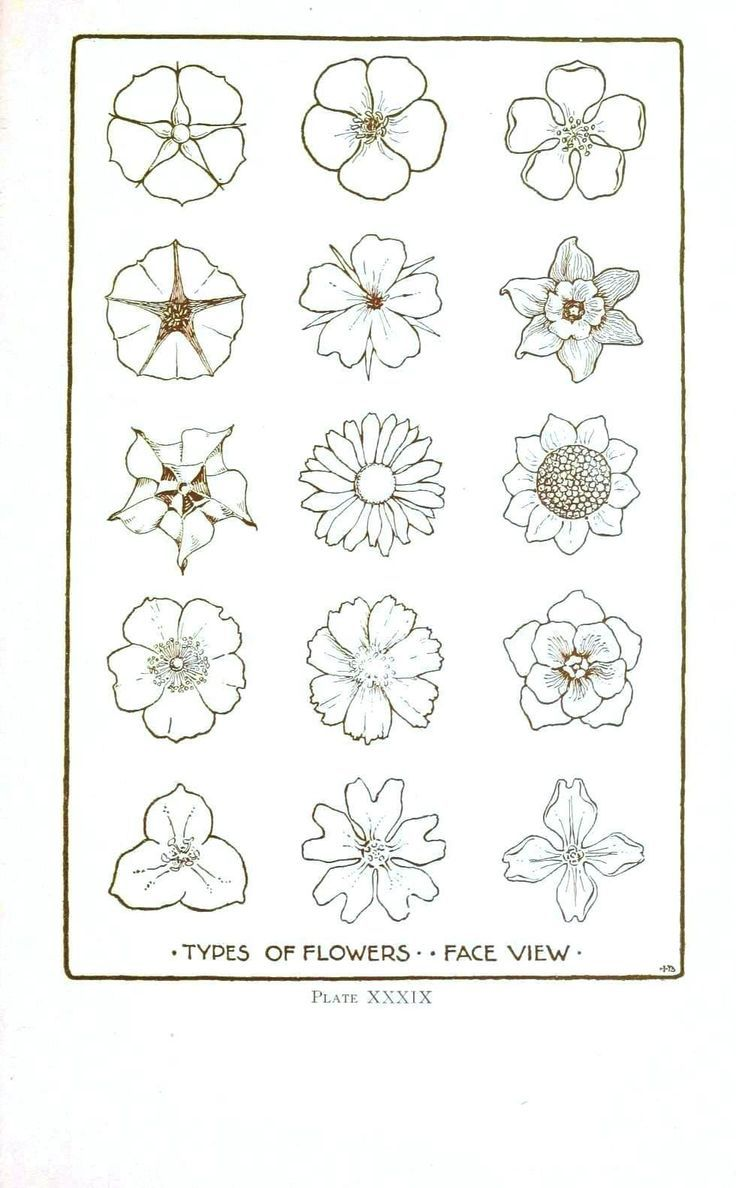 How To Draw Different Types Flowers Step By Step 25 Trending