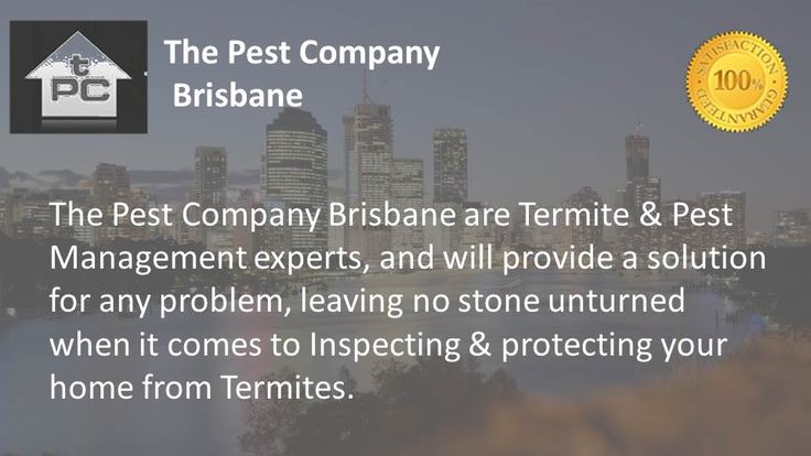 The Pest Company Unit 3, 3245 Logan Road Underwood QLD 4119 Phone: 1300 552 234 Email: luke@thepestcompany.com.au Website: http://www.thepestcompanybrisbane.com.au