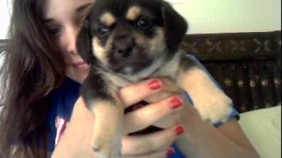 puppies! We have 3 left in need of good homes!!!!!!!!