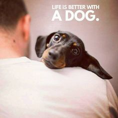 "True 100% Dachshund Quotes & Pictures (@mydachshundfamily) on Instagram: ""True 100% . @bun_thesausagedog"""