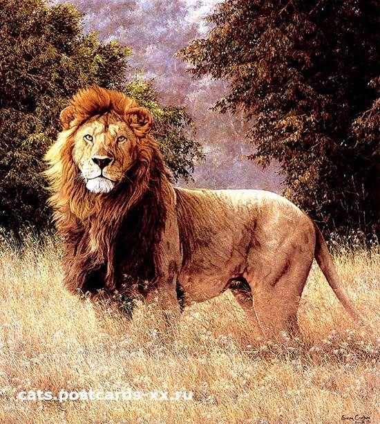 koning der koningen