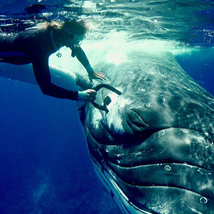 Best 25+ Biologist ideas on Pinterest Marine biology, Screaming - marine biologist job description