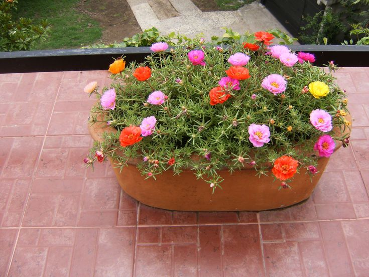 1000 ideas about plantas para jardin on pinterest for Plantas de exterior resistentes al sol
