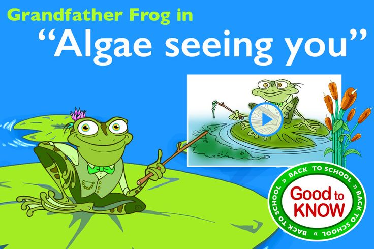 "Grandfather Frog in ""Algae Seeing You"" - Find out what is green algae from your favorite character Grandfather Frog in ""Algae Seeing You"". This fun live drawn story tell you about green algae, why it appears in the water and how it's dangerous for animals and humans. Great resource to teach kids about dangers of toxic waste and to be mindful about environment. http://grandfatherfrog.com/kidoons/webisodes/208-grandfather-frog-in-algae-seeing-you"
