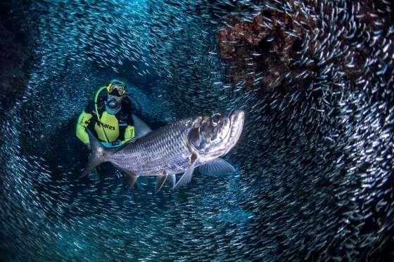 George Town, Cayman Islands - Predrag Vuckovic/Reuters