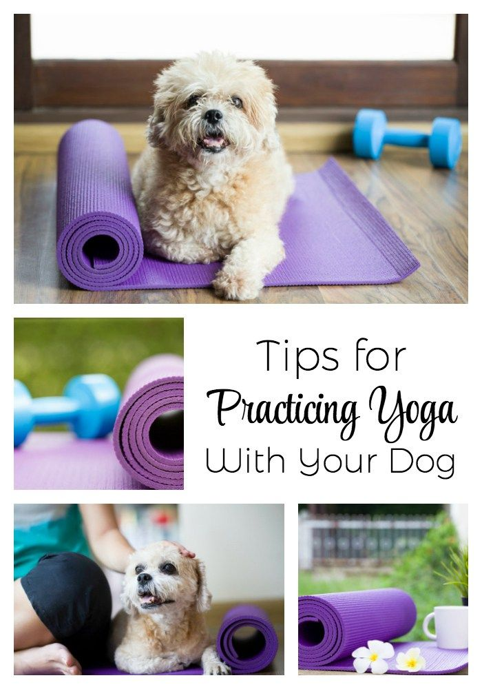 Tips For Practicing Yoga With Your Dog Meditation Dog Training