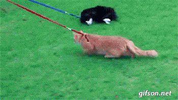 Cats Don`t Do Walkies