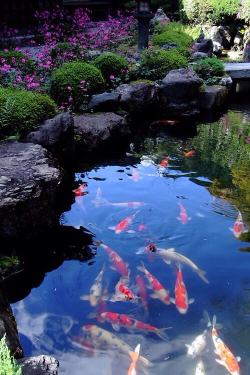 17 best images about gardens on pinterest gardens for Japanese koi pond garden
