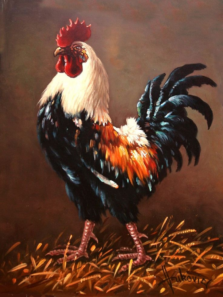 Rooster – the master of the yard