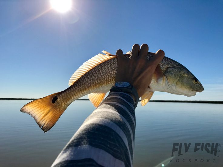 1733 best fishing images on pinterest brown trout for Texas saltwater fish