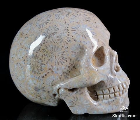 ✿ Coral Fossil Crystal Skull ~ Coral brings diplomacy and concurrence, quiets…