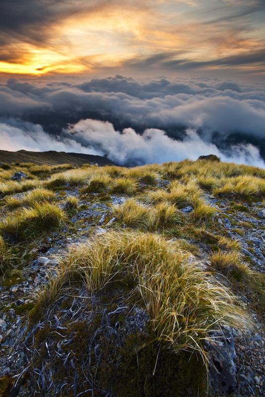Wind-battered tussocks on Bridge Peak, Tararua Ranges, North Island, New Zealand (Mark Watson)