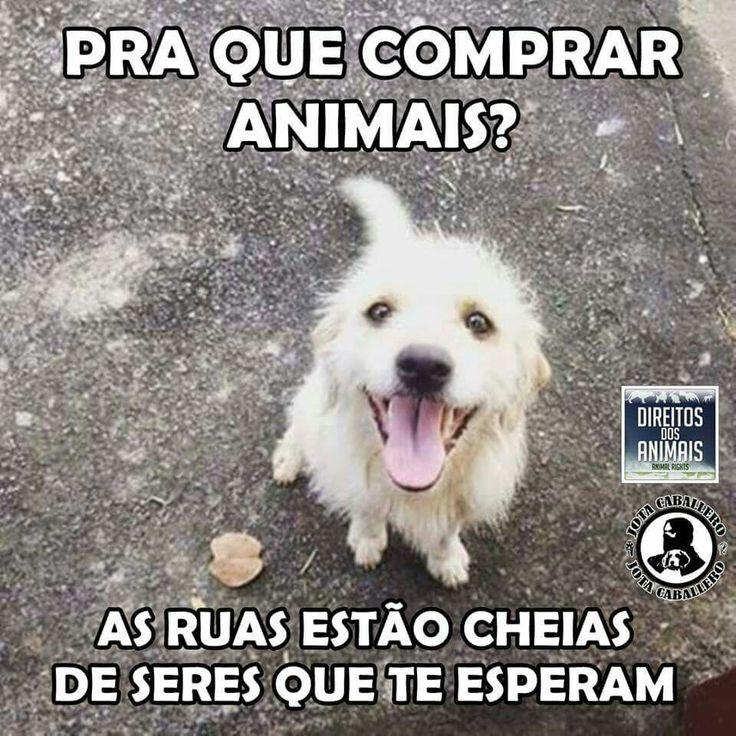 Não compre animais, eles não são mercadoria. Adote-os, eles precisam de amor e carinho.