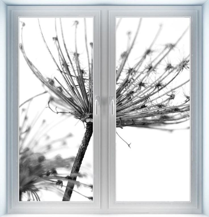 Majestic Wall Art - White Flower Instant Window, $44.00 (http://www.majesticwallart.com/instant-windows/white-flower-instant-window)